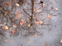 Отражение дерева в лужице Стоковая Фотография