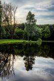 Отражение дерева на озере на быке Haagse, лесе в Hagu Стоковое фото RF