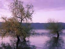 Отражение дерева на озере Стоковое Изображение
