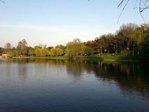 Отражение дерева на озере Стоковая Фотография
