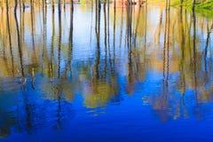 Отражение деревьев в реке на зоре Стоковое фото RF