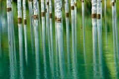 Отражение деревьев на зеленой предпосылке озера Стоковое Изображение