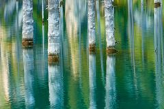 Отражение деревьев на зеленой предпосылке озера Стоковые Изображения