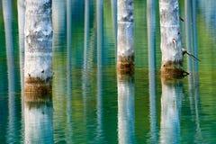 Отражение деревьев на зеленой предпосылке озера Стоковое фото RF