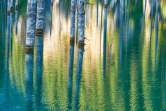 Отражение деревьев на зеленой предпосылке озера Стоковые Изображения RF