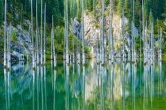 Отражение деревьев на зеленой предпосылке озера Стоковая Фотография RF