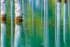 Отражение деревьев на зеленой предпосылке озера Стоковые Фотографии RF