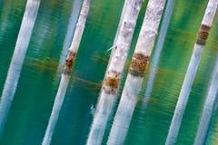 Отражение деревьев на зеленой предпосылке озера Стоковая Фотография