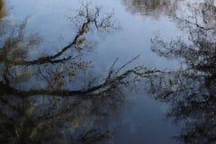Отражение деревьев на поверхности воды стоковые фотографии rf