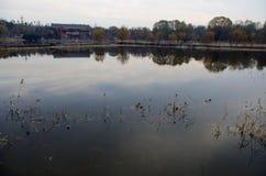 Отражение деревьев падения озеро Стоковое фото RF