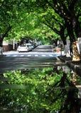 Отражение деревьев, Qingdao, Китай стоковое фото rf