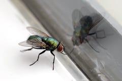 отражение дома мухы крупного плана стеклянное Стоковые Фотографии RF
