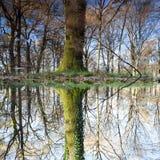 Отражение дерева в озере Стоковая Фотография RF