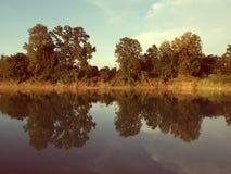 Отражение дерева в озере Стоковое Изображение