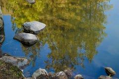 Отражение дерева на озере Стоковое Изображение RF