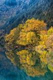 Отражение дерева осени с снегом покрыло лес стоковое фото rf