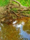 Отражение дерева Стоковые Фотографии RF