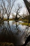 Отражение деревьев в болоте Стоковая Фотография RF