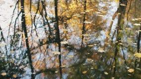 Отражение деревьев в воде Листья желтого цвета и апельсина на пруде сток-видео