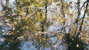 Отражение деревьев в воде Листья желтого цвета и апельсина на пруде видеоматериал