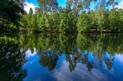 Отражение деревьев в реке стоковые фото