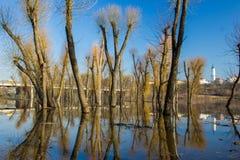 Отражение деревьев на воде. Стоковое Фото
