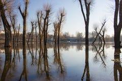 Отражение деревьев на воде. Стоковая Фотография