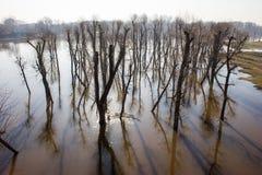 Отражение деревьев на воде. Стоковое Изображение RF