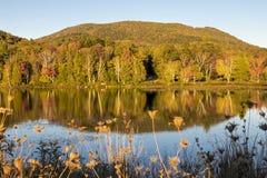 Отражение деревьев на осени стоковое фото rf