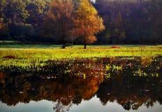 Отражение деревьев стоковое изображение