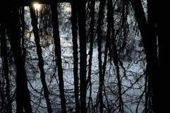 отражение деревьев Стоковые Изображения RF