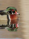 Отражение деревянной утки Стоковые Фото