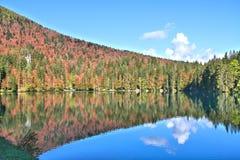 Отражение леса в озере Стоковое фото RF