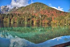 Отражение леса в озере Стоковое Изображение