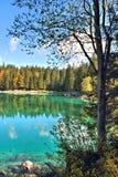 Отражение леса в озере Стоковое Изображение RF
