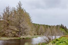 Отражение 1 леса и реки Стоковые Фотографии RF