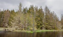 Отражение 2 леса и реки Стоковое Фото