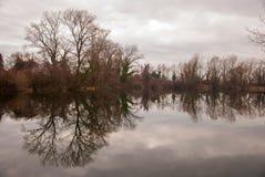 Отражение леса Стоковые Фото