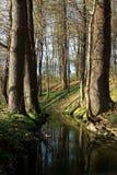 Отражение леса Стоковое Изображение RF