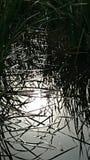 Отражение заболоченного рукава реки Стоковое фото RF