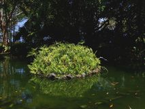 Отражение завода на небольшом озере в саде парка стоковая фотография rf
