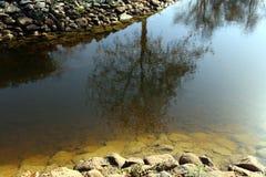 Отражение заводов и структур в воде Стоковое Изображение RF