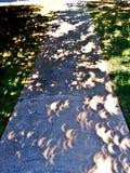 Отражение затмения Стоковые Изображения