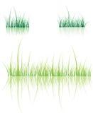 отражение зеленого цвета травы Стоковое Фото