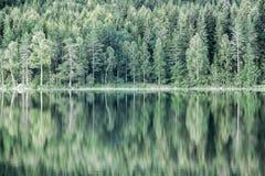 Отражение зеленых деревьев в озере Стоковые Фото