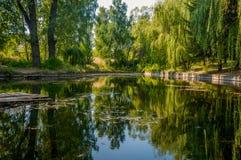 Отражение зеркала деревьев в озере Стоковые Изображения RF