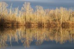 Отражение зимы Стоковая Фотография