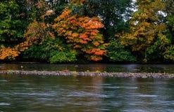 Отражение лист падения в пруде на солнечный день в осени стоковые фотографии rf