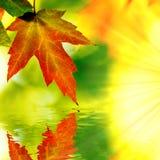 Отражение кленового листа осени стоковое изображение