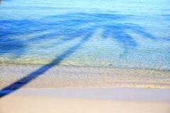 Отражение кокосовой пальмы на море Стоковое фото RF